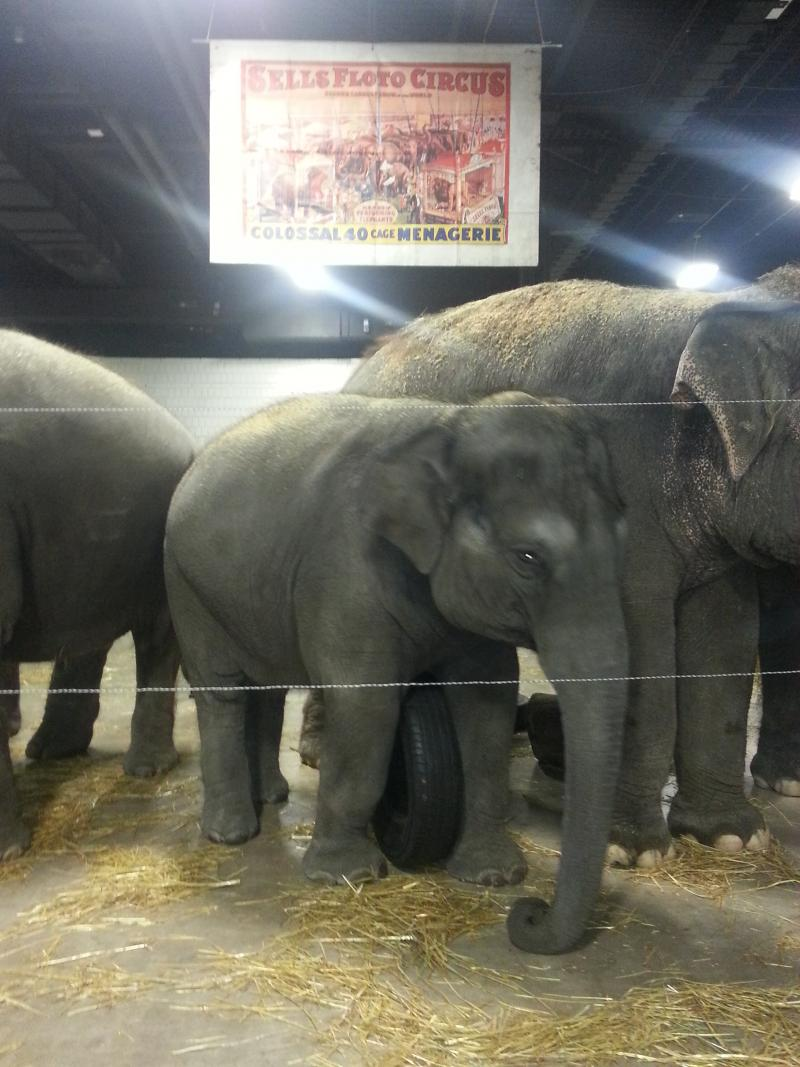 People For The Ethical Treatment Of Animals (PETA) plans protests at most of the circus tour stops.