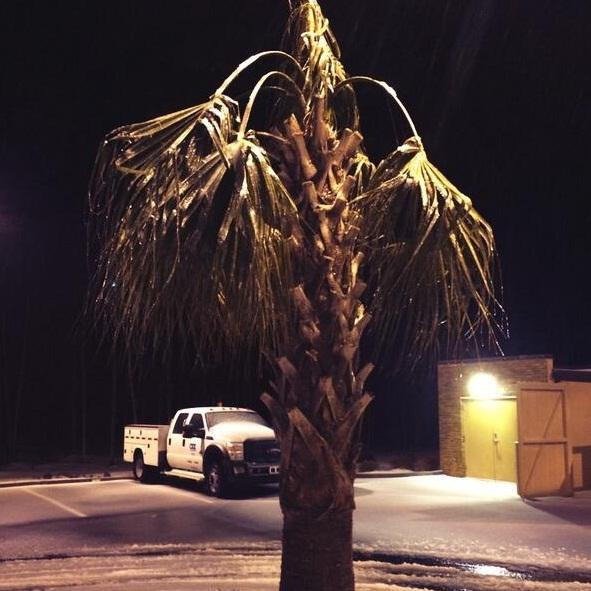 'Icy trees are not good for power lines.'