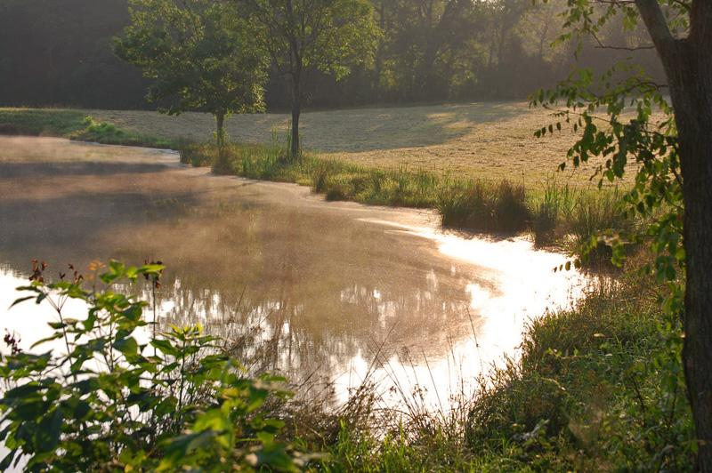 Photo: A pond in Lee County