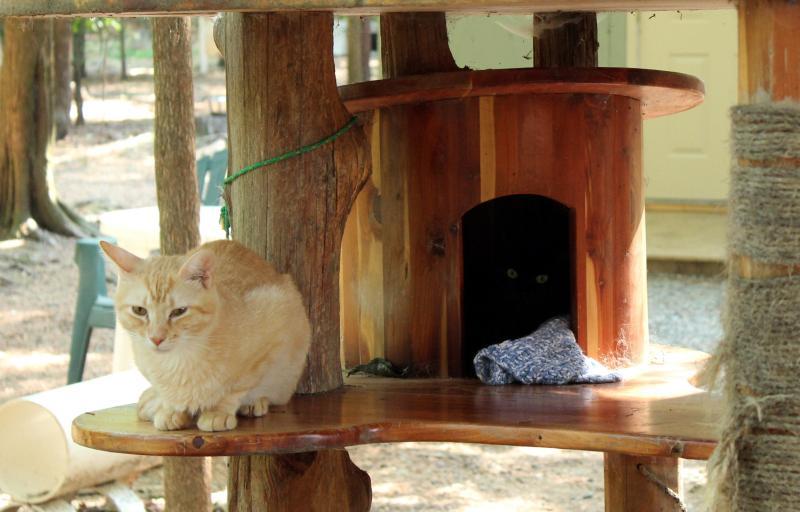 Goathouse Refuge Cats