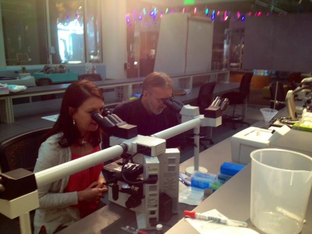 Julie Urban, scientist at the Museum of Natural Sciences shows host Frank Stasio how to view face mites under a microscope.