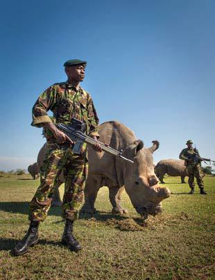 Corporal Simon Irungu and a platoon of armed guards at Ol Pejeta Conservancy in Kenya watch over four of the last seven northern white rhinos in existence.