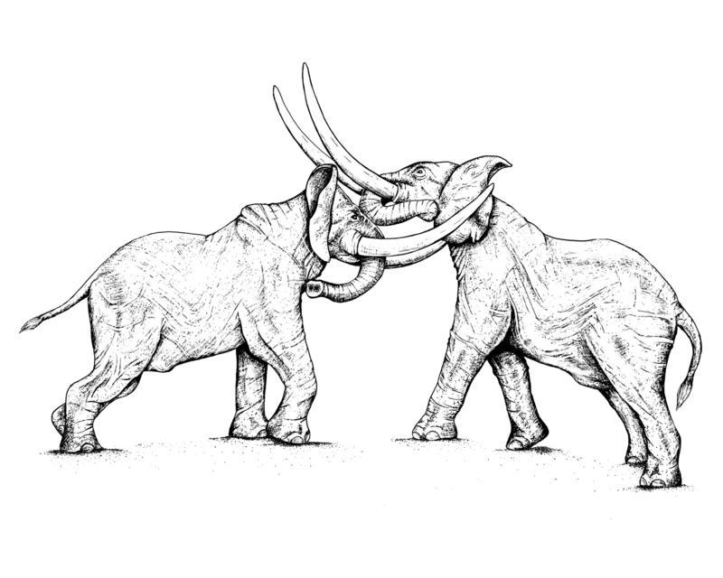 Battling bulls.