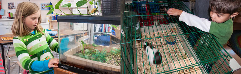 Class pets at the Francine Delany New School.