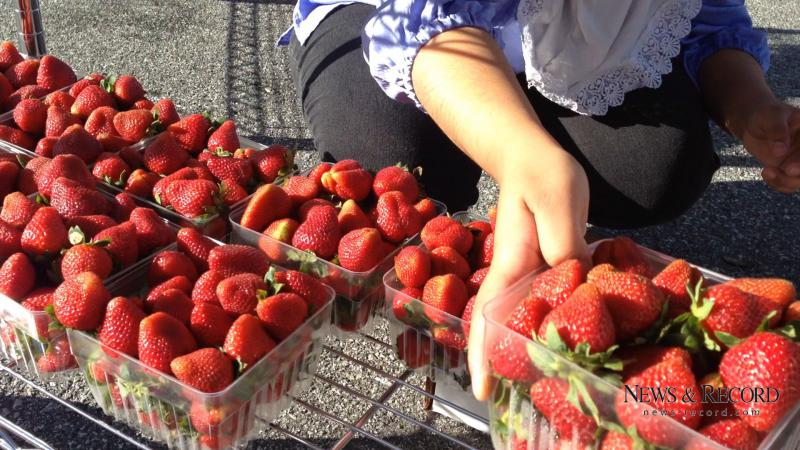 An image of somebody picking strawberries