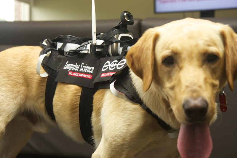 An image of a dog wearing a computerized harness