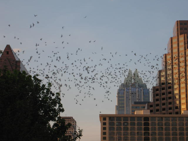 Bats make up roughly 20 percent of all mammals in the world.