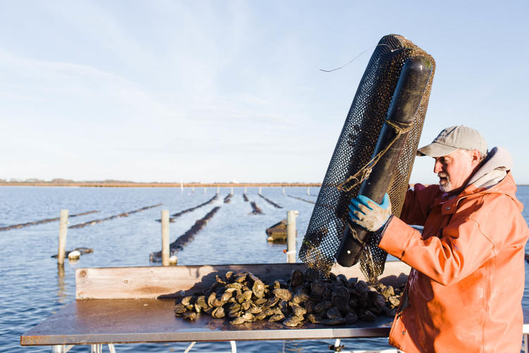 Image of Jay Styron working with oysters
