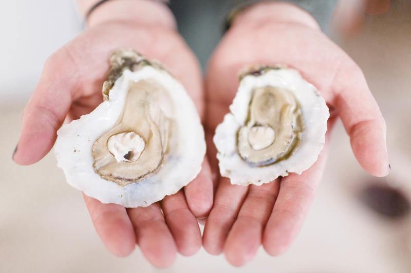 Efforts are underway to restore oyster populations, while mariculture looks at sustainable farming practices.
