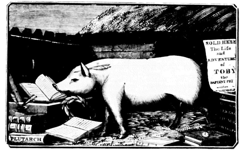 Toby was one of many 'learned pigs' that spelled words and solved math problems onstage in England and America in the 18th and 19th centuries.