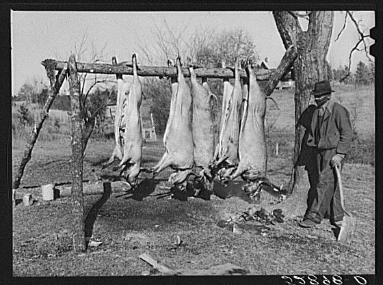 A Virginia farmer and his hogs in 1939