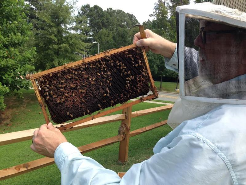 John Rintoul, Beehives, Bees, Honey Bee
