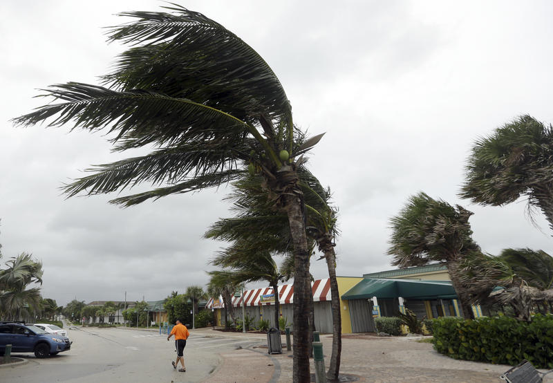 Palm trees sway in high gusts of wind, Thursday, Oct. 6, 2016, in Vero Beach, Fla. Hurricane Matthew continues to make a path for Florida's east coast from the Bahamas.