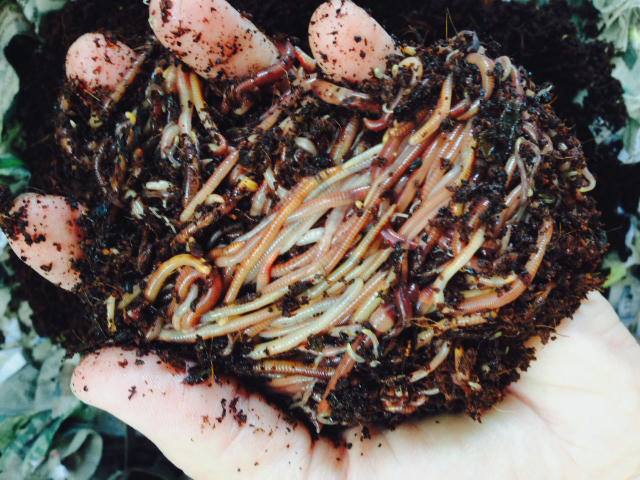 a handful of worms in a person's hand