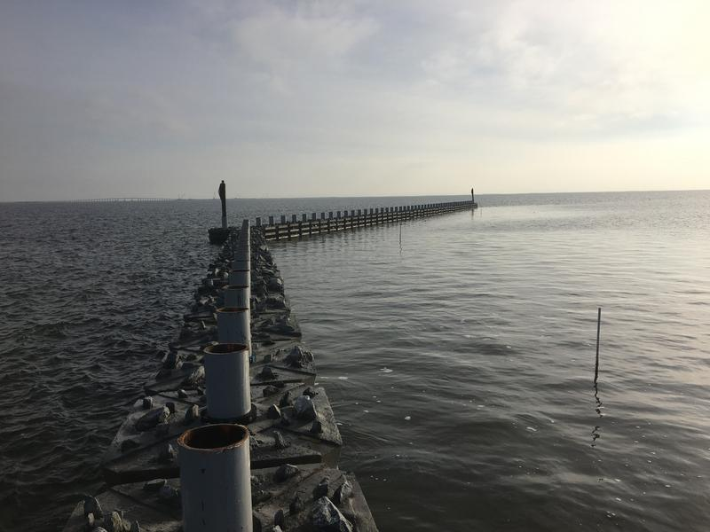 New living reef on Pamlico Sound.
