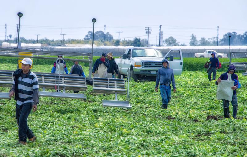 immigrant workers on a field