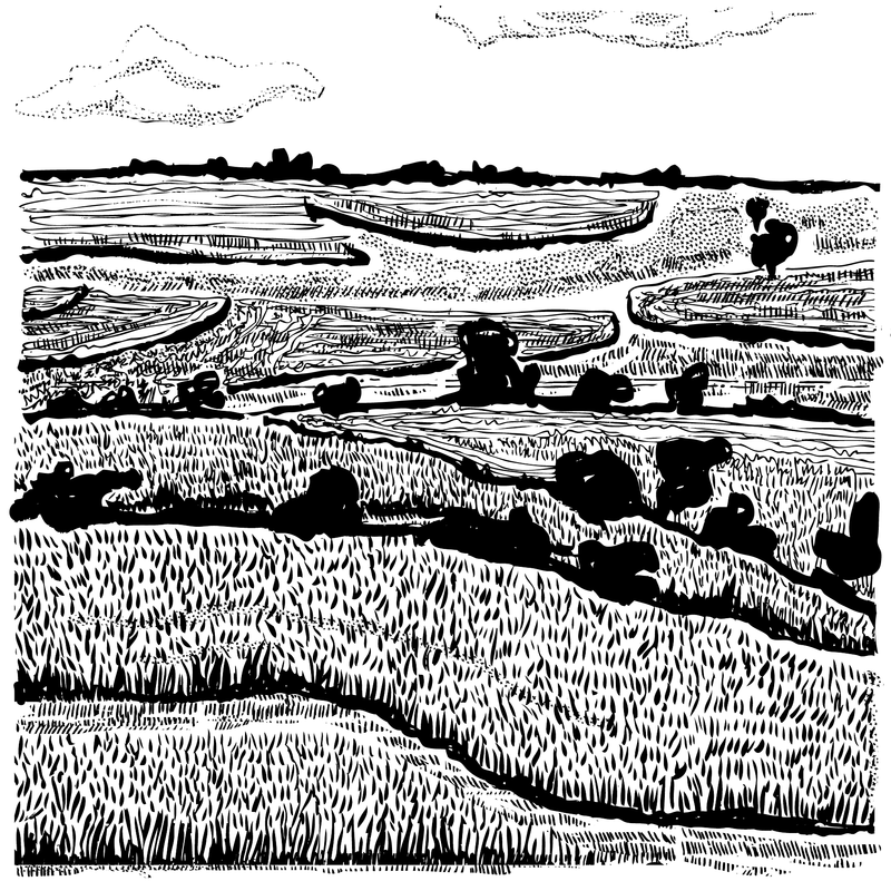 illustration of grass