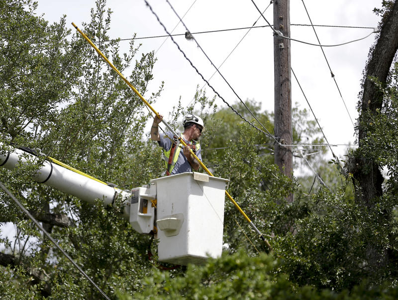 A worker trims branches from trees near power lines in a downtown neighborhood in Orlando, Fla. during preparation for the arrival of Hurricane Irma, Friday, Sept. 8, 2017.