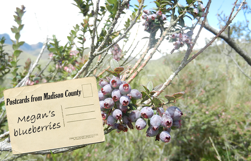 Blueberries and Postcards From Madison County