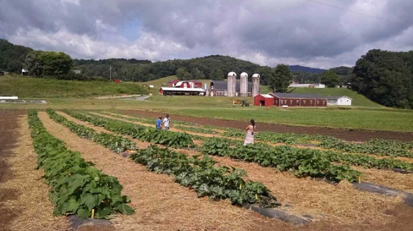 At Mountain Research Station, an experimental farm in Waynesville, North Carolina, farmers are looking into the viability of unexpected crops like hemp and truffles.