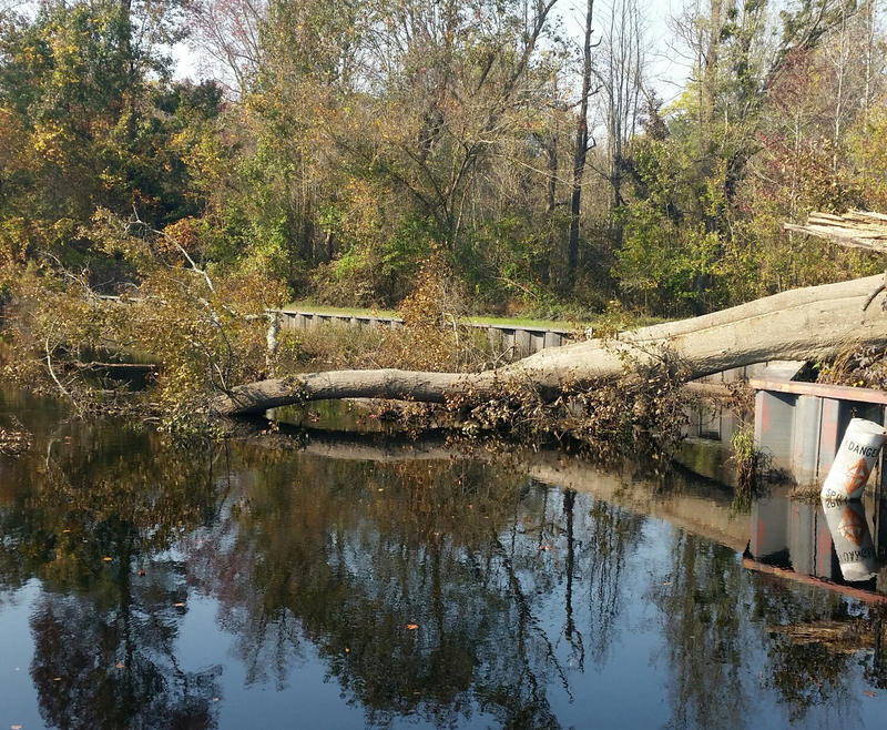 Tree are strewn across the Dismal Swam Lock after Hurricane Matthew in 2016. The Dismal Swamp will reopen on 10/31/17 after being closed for more than a year because of damage from Hurricane Matthew.