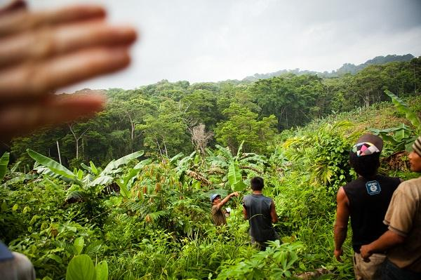 photo of several men walking through thick vegetation