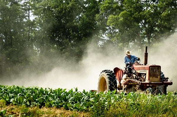 photo of a person operating a tractor in a tobacco field