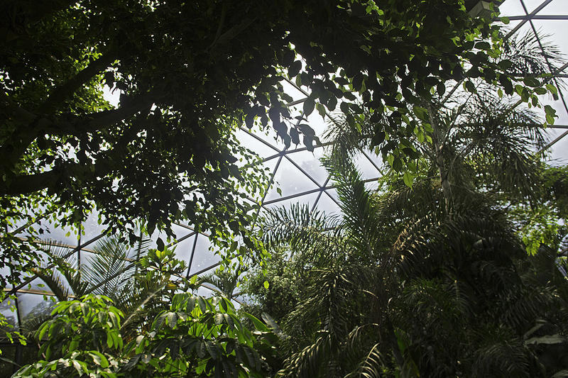 The glass panes in the Forest Aviary at the North Carolina zoo need replacement, according to Zoo officials.