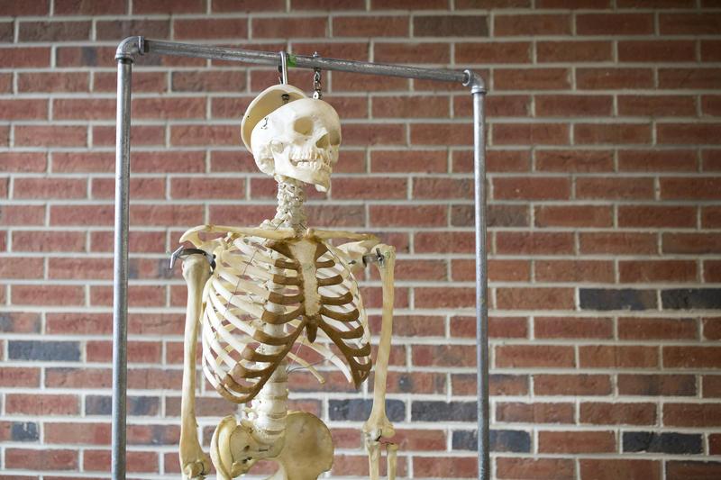 A skeleton hangs on the Medical Education Development (MED) Program floor at UNC Chapel Hill on July 5, 2018.