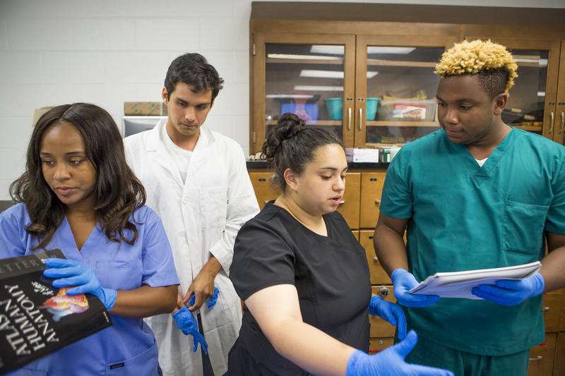 Students in the Medical Education Development (MED) Program (left to right) Jazmine Walker, Miguel Vasquez, Gloribel Vanegas, and Joshua Walker prepare to dissect a cadaver at UNC Chapel Hill on July 5, 2018.