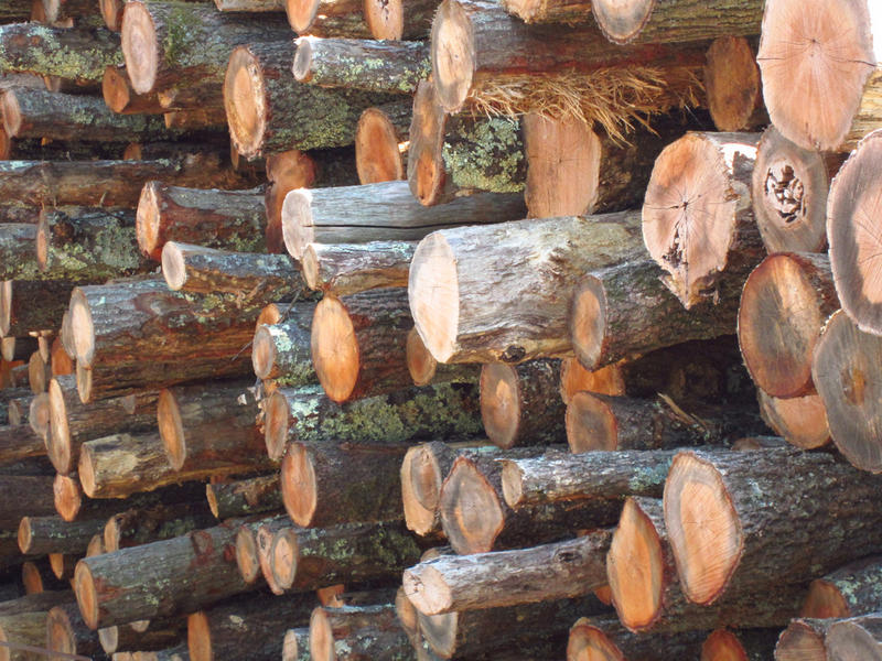 File photo of a pile of logs.