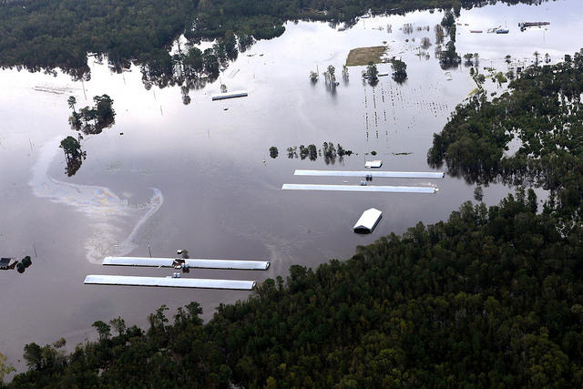 A poultry farm flooded due to Hurricane Florence