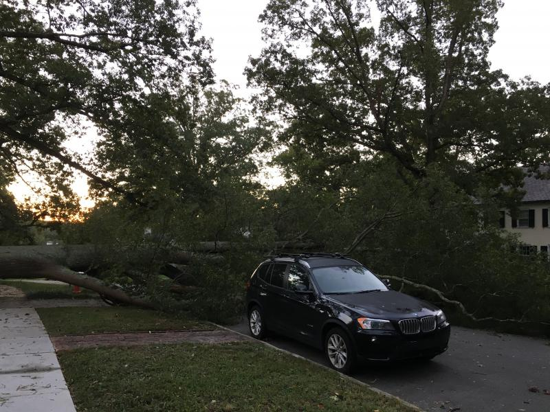 A fallen tree blocks a street in the Forest Hills neighborhood of Durham on Fri, OCt. 10, 2018.