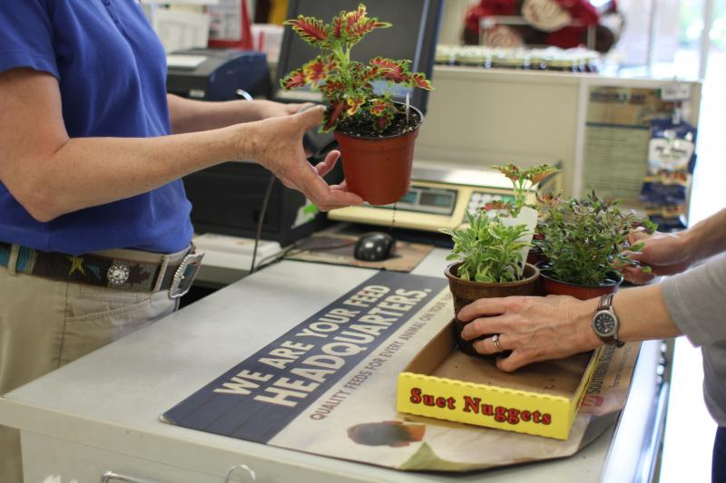 A customer checks out at Southern States Nursery in Carrboro, business transaction.