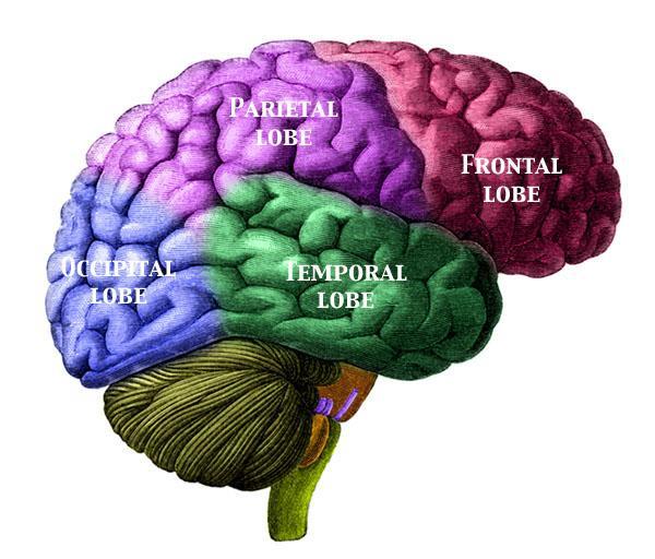 news mind brain relationships