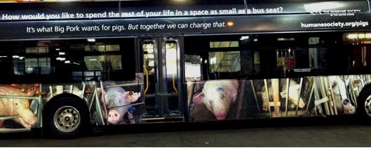 A Humane Society bus ad in Washington D.C., similar to one proposed for Raleigh buses.
