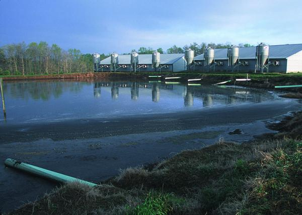 waste management system for a 900State of the art lagoon  head hog farm in Georgia.