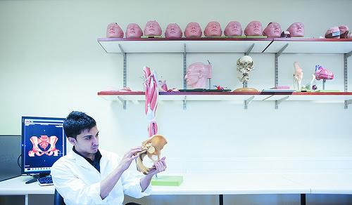 Medical student studying the structure of a pelvis.