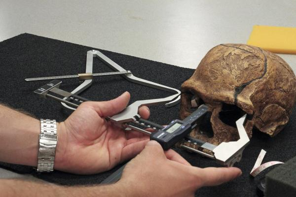 Robert Cieri measuring a fossil