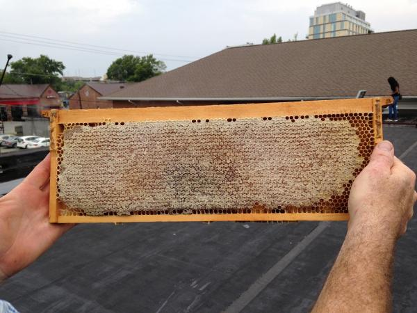This is a closeup of the honeycomb-filled frame.