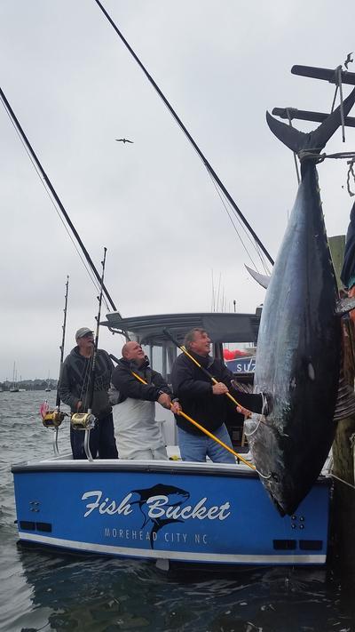 fisherman lands largest bluefin ever off carolina coast wunc