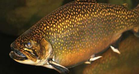 House lawmakers approve measure that would weaken for Nc trout fishing regulations