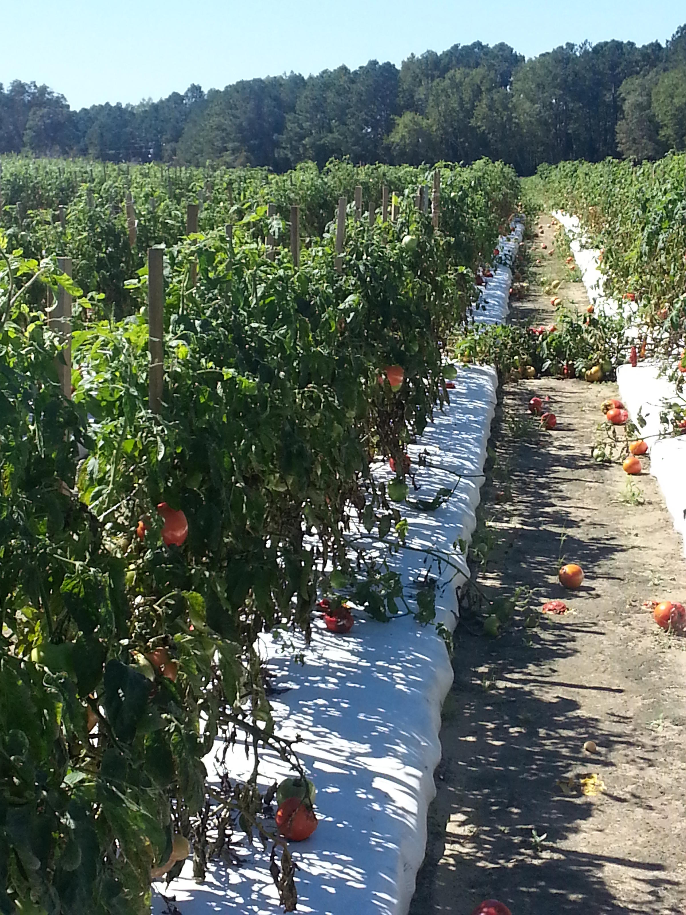 Farmers assess damage following storms wunc - The most profitable orchards ...