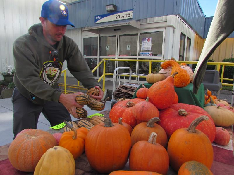 Marine veteran John Knox arranges fall produce at the Growing Veterans farm stand at the VA Hospital in Seattle.