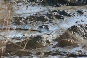 Mounds of coal ash waste fill a creek following a 2008 spill at the TVA's Kingston Fossil Plant