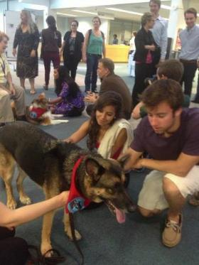 USF St. Pete students take a break from Finals Week with therapy dogs.