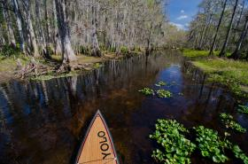 A paddler's-eye view of Fisheating Creek