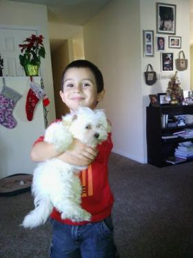 Five-year-old Marcus Garcia holds Honey, the family's 12-week-old Shih Tzu, that is still missing after a burglar broke into the family's Tampa home.