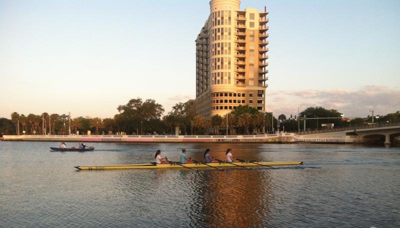 Scullers glide by downtown Tampa