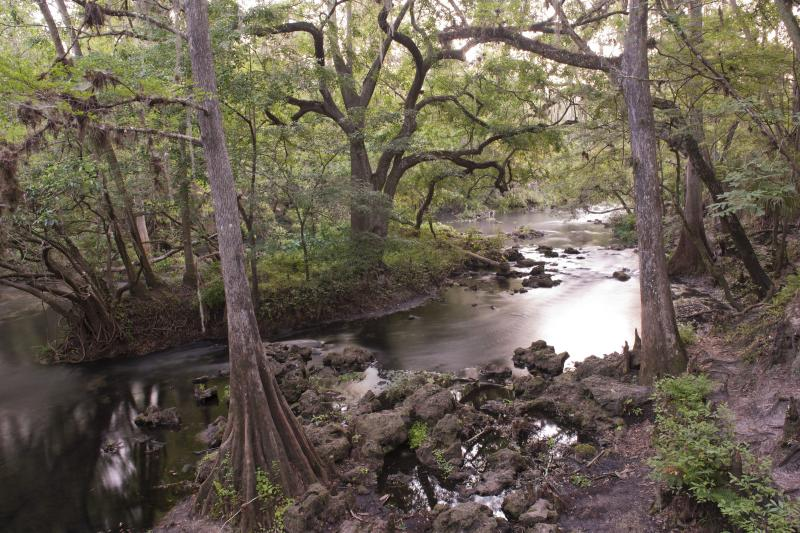 A canopy of trees cover the upper Hillsborough River.